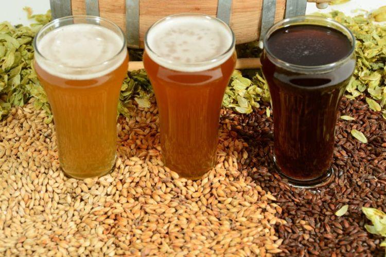 8 Easy Steps to Malt Barley at Home