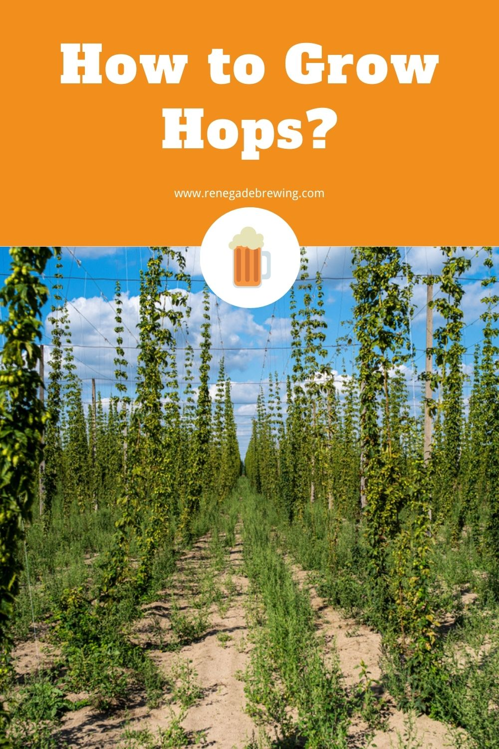 How to Grow Hops (Tips & Complete Guides) 2