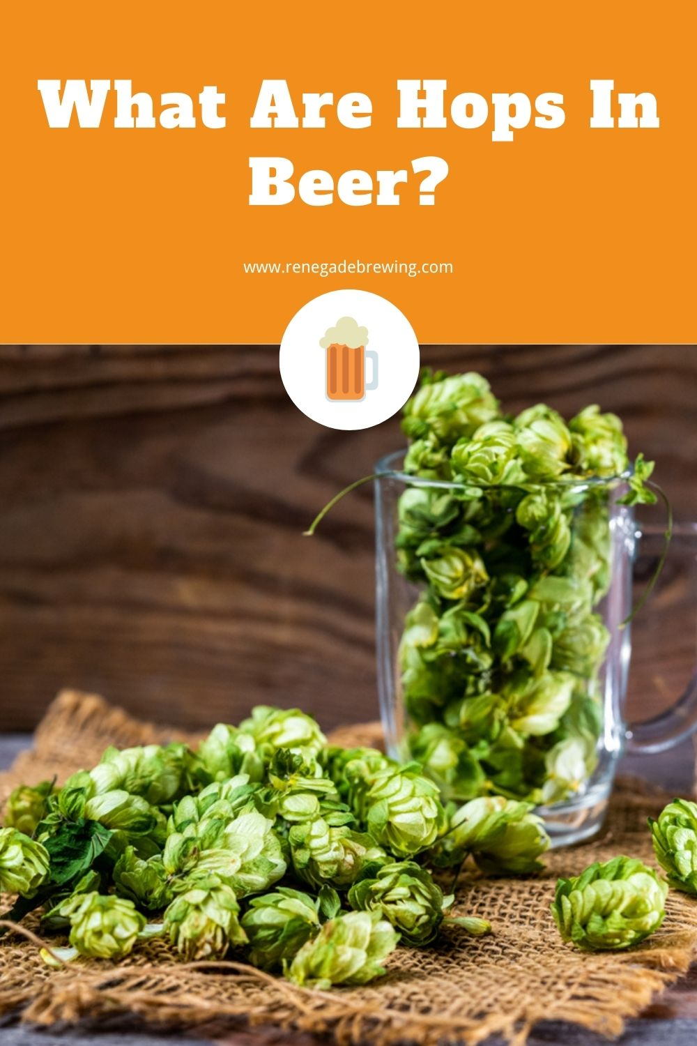 What Are Hops In Beer (Why Add It) 1