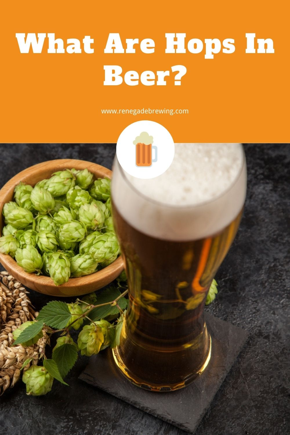 What Are Hops In Beer (Why Add It) 2