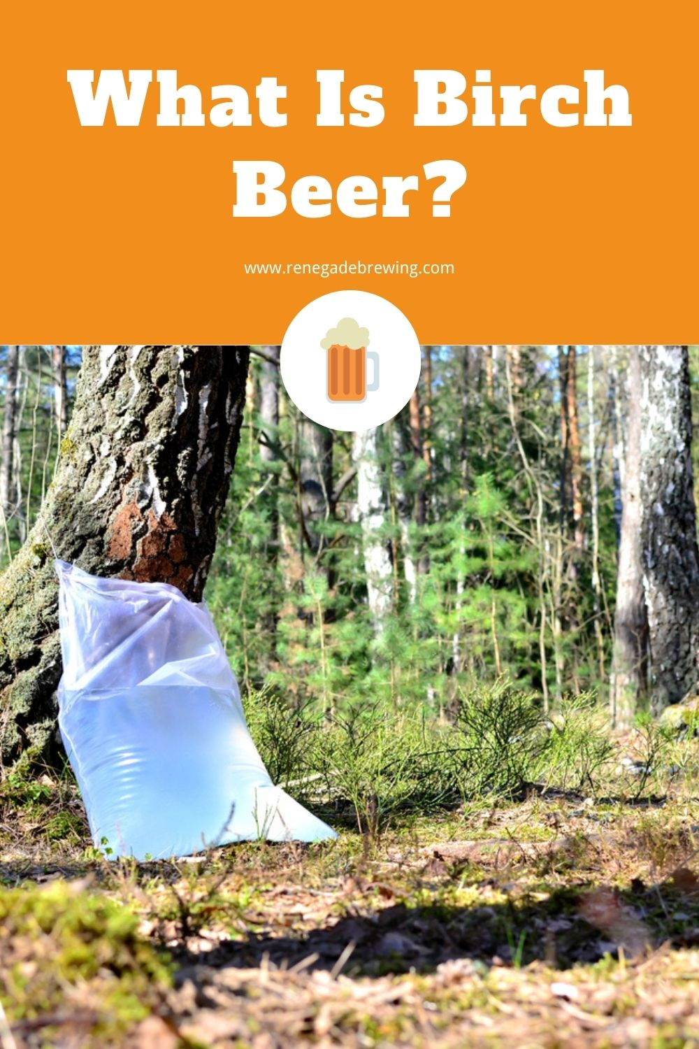 What Is Birch Beer (Definition, History & Recipe) 1